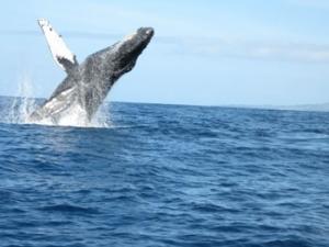 Seminarreisen auf Hawaii - Maui, Wale