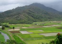 Seminarreisen auf Hawaii - Kauai