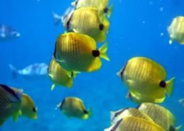 Seminarreisen auf Hawaii - Fische