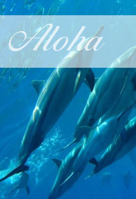 Delfine - Seminarreisen auf Hawaii