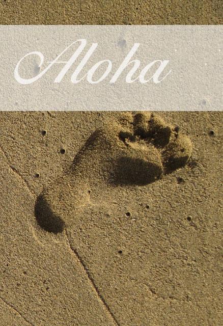 Kontakt - Seminarreisen auf Hawaii